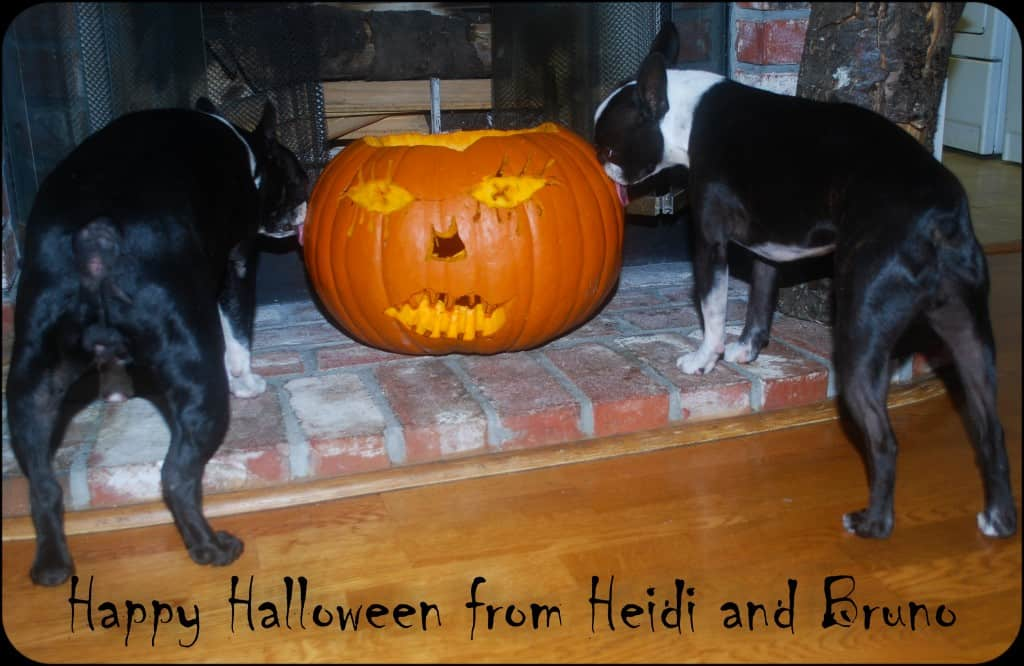 Two dogs licking a jack-o-lantern.
