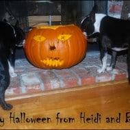 Creepy, Crawly, Spooky Stuff for Halloween!