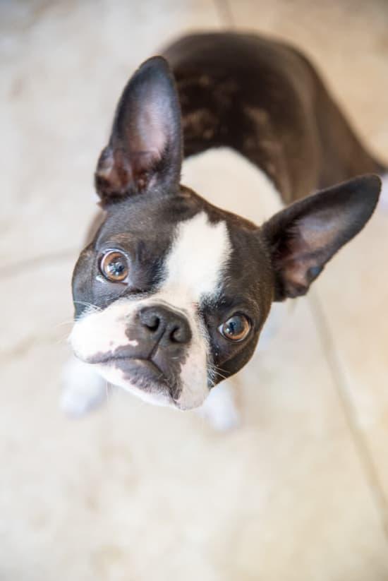 Take Your Dog to Work Day - Wellness TruFood