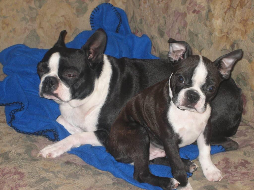 Bruno and Heidi
