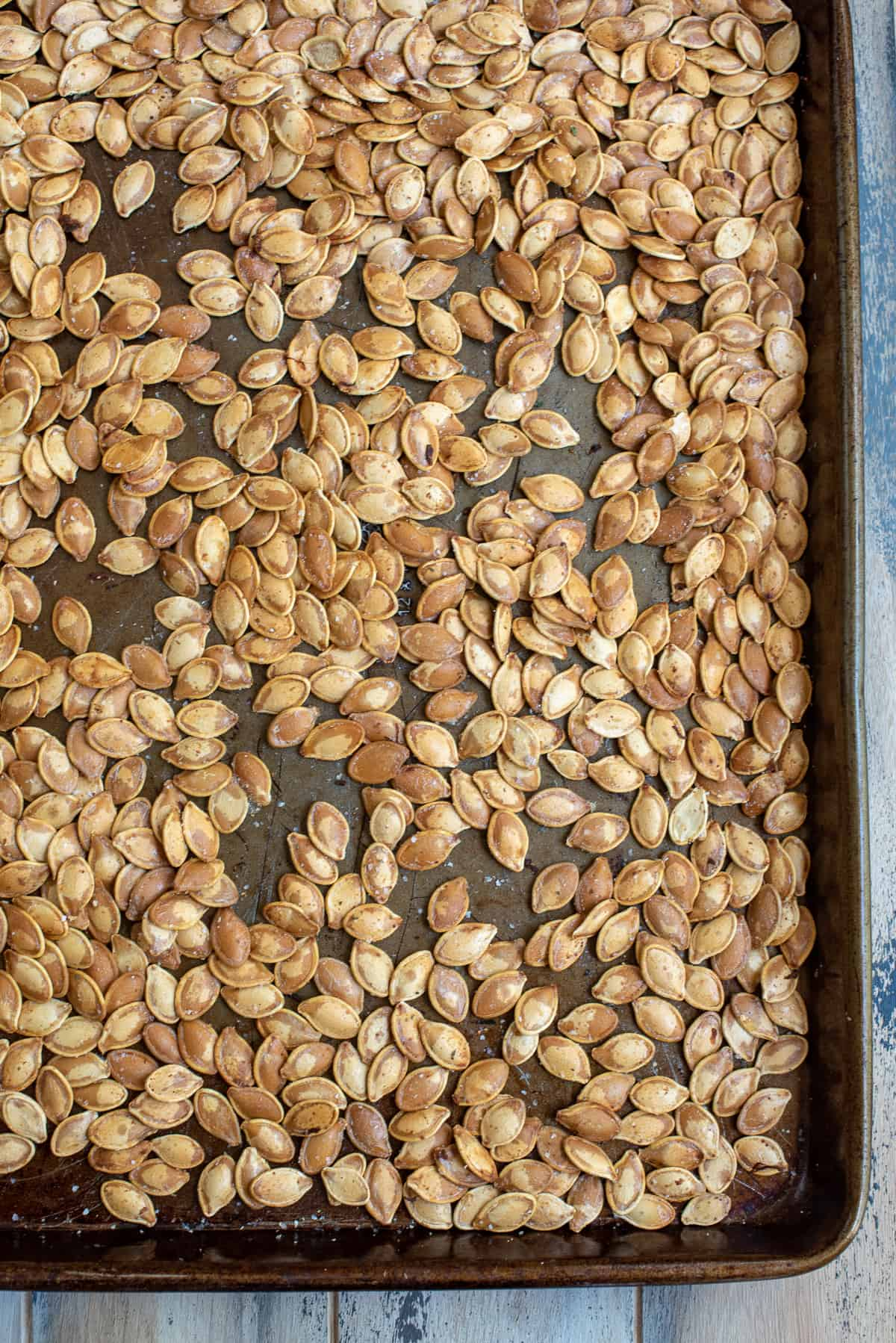 Perfect Roasted Pumpkin Seeds on a baking sheet after they come out of the oven.